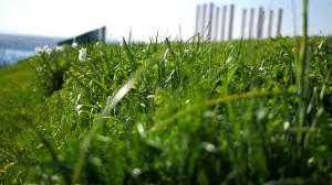 12 colonnes flou herbe