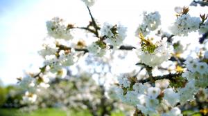 zoom branche en fleur
